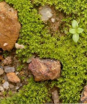 Персональная выставка Ольги Черкас «Очаровательная моховая палитра»
